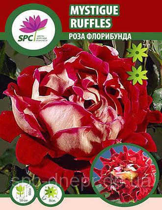 Роза флорибунда Mystique Ruffles, фото 2
