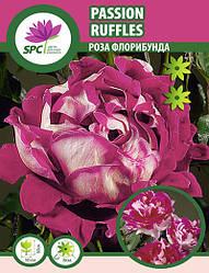 Роза флорибунда Passion Ruffles