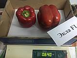 Семена перца Экла F1 / Еkla F1, 500 семян, фото 3