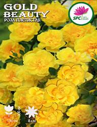 Роза плетистая Gold Beauty