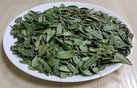 Брусника лист 50г, фото 2