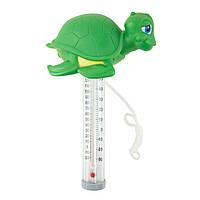 Термометр - игрушка для бассейна черепашка