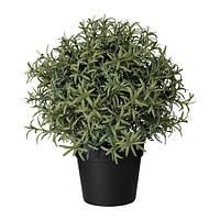 Искусственное растение в горшке IKEA FEJKA 9 см розмарин 903.821.13