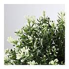 Искусственное растение в горшке IKEA FEJKA 9 см тимьян 903.751.55, фото 2
