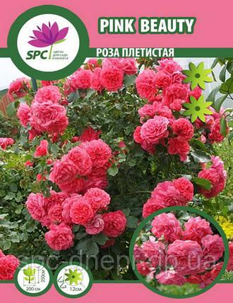 Роза плетистая Pink Beauty, фото 2