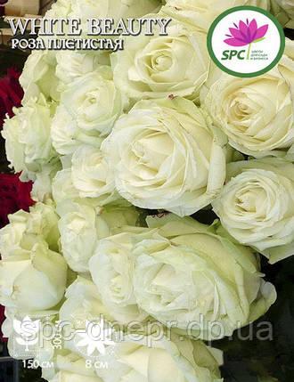 Роза плетистая White Beauty, фото 2