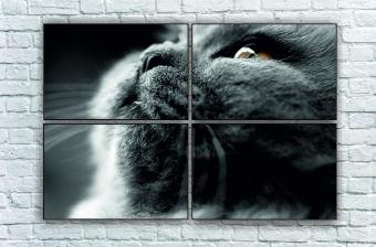 """Модульна картина"""" Персицький кіт"""""""