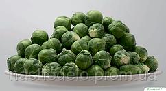 Семена брюссельской капусты Франклин F1 2500 семян Bejo