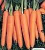 Семена моркови Нарбонне F1 1 млн. семян Bejo
