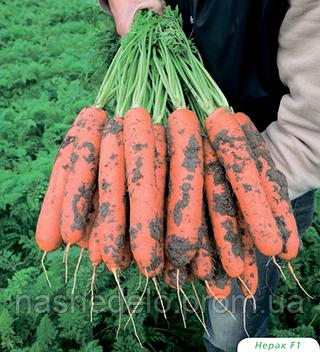Семена моркови Нерак F1 1 млн. семян Bejo
