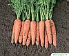 Семена моркови Белградо F1 1 млн. семя Bejo