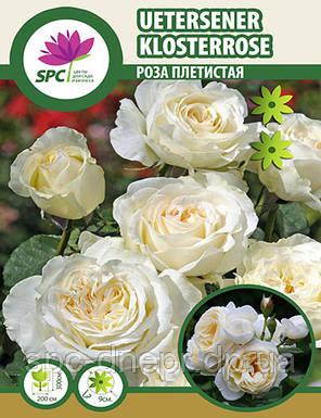 Роза плетистая Uetersener Klosterrose, фото 2