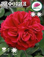 Роза романтическая Euphoria