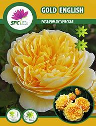 Роза романтическая Gold English