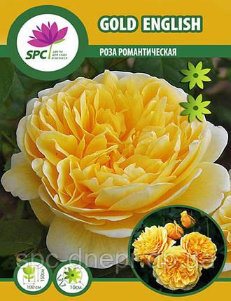Роза романтическая Gold English, фото 2
