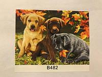 Картины по номерам: Животные