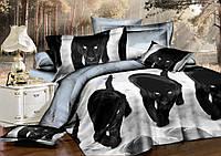 Семейный комплект постельного белья сатин (8251) TM KRISPOL Украина