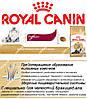 Сухой корм Royal Canin Persian Adult на развес