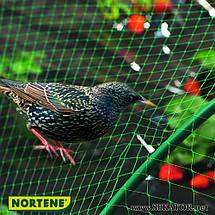 Захисна сітка від птахів Nortene (Франція), фото 2