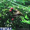 Захисна сітка від птахів Tenax ORTOFLEX (Італія), фото 2