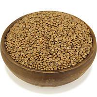 Чечевица красная, семена чечевицы, фото 1