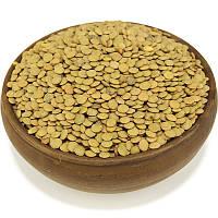 Чечевица зеленая, семена чечевицы, фото 1