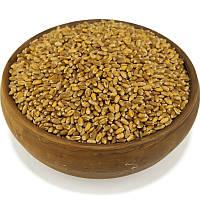 Пшеница, зерно пшеницы, фото 1