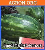 Амфион F1 - семена арбуза 1000 семян - Takii Seeds (Япония)