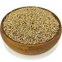 Рожь, зерно ржи, жито