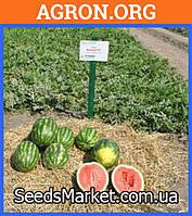 Антем F1 - семена арбуза 100 грамм - Hollar Seeds (США)