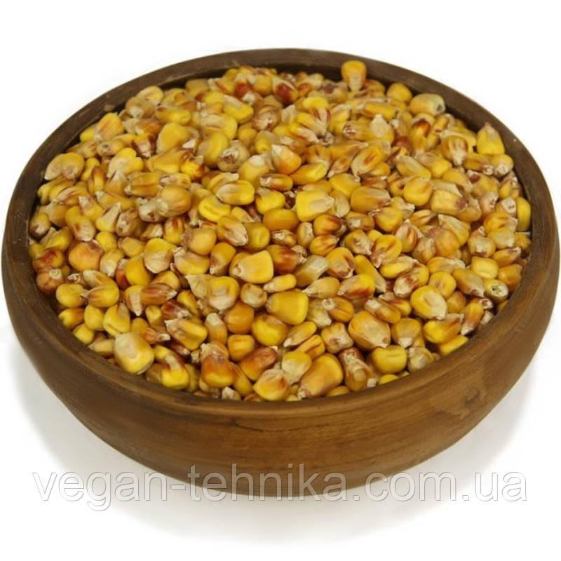 Кукуруза, зерно кукурузы
