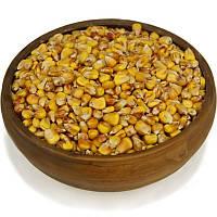 Кукуруза, зерно кукурузы, фото 1