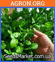Аста F1 - семена шпината