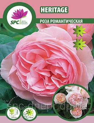Роза романтическая Heritage, фото 2