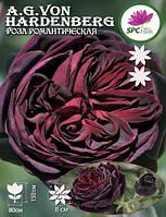 Роза шраб Astrid Grafin von Hardenberg