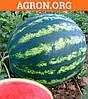 Бонта F1 семена кавуна типу Кримсон Свит Seminis 1 000 насинин