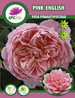 Роза романтическая Pink English