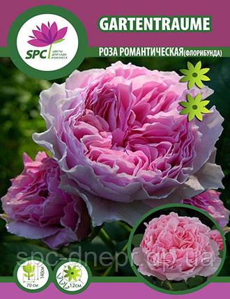 Роза флорибунда Gartentraume, фото 2
