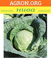 Тиара F1 - Семена белокочанной капусты