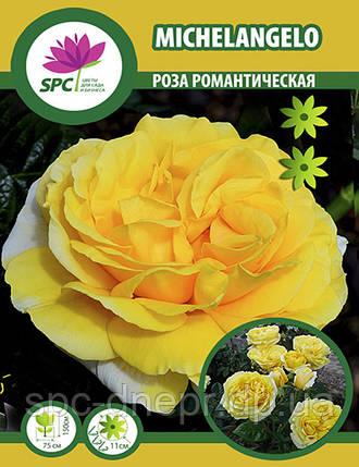 Роза романтическая Michelangelo, фото 2