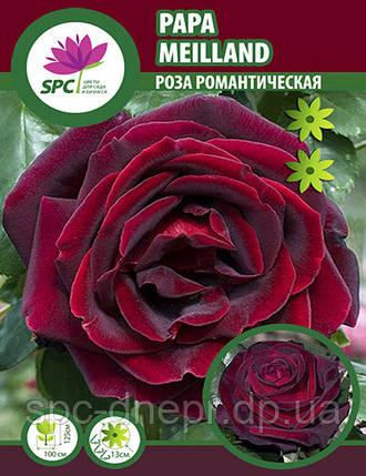 Роза чайно-гибридная Papa Meilland, фото 2