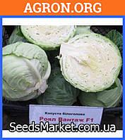 Роял вантаж F1 - Семена белокочанной капусты