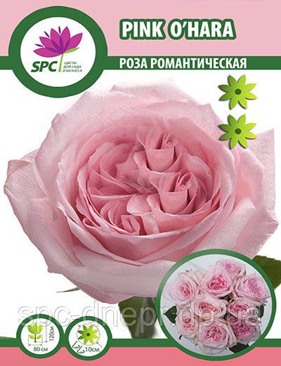 Роза романтическая Pink O'hara