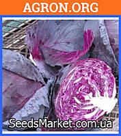 Рокки F1 - Семена краснокочанной капусты