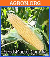 Санрайз F1 семена кукурудзи солодкої Agri Saaten 5 000 насинин