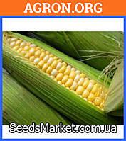 Свитстар F1 семена кукурудзи суперсолодкої Syngenta 100 000 насинин