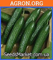SX 116 F1 - семена огурцов
