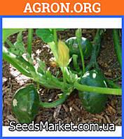 Гриндиск F1 - семена патиссона