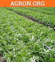 Рокета - семена рукколы