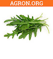 Семена рукколы Италия Semenaoptom 10 г